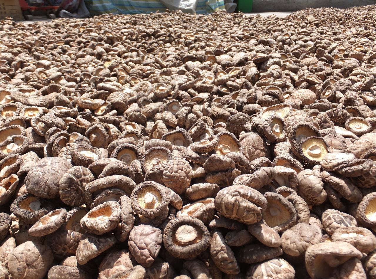 香菇种植技术