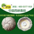 欢乐菇对香菇细分市场进行切割