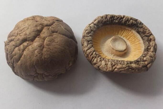 欢乐菇对食用菌行业发展的深度调研