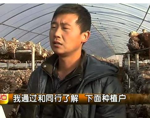 西峡香菇连续2年大幅减产