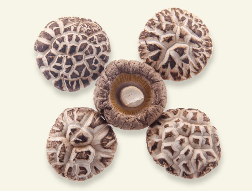 4cm以上白花菇