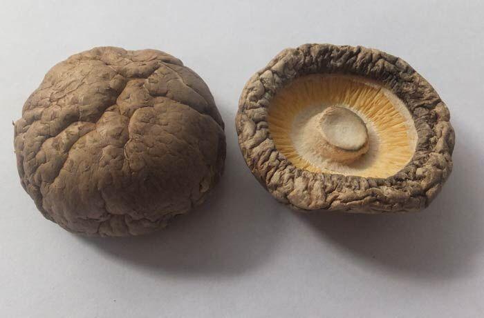 餐饮企业专用香菇