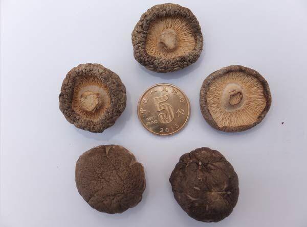 2-2.5cm金钱菇