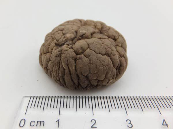 3-4cm香菇