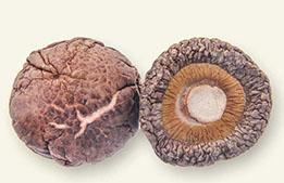 3-4cm厚菇