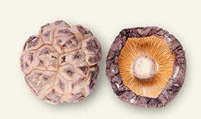 4cm以上茶花菇