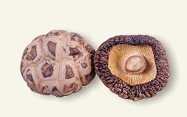 3cm以下茶花菇