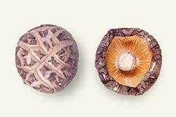 3-4cm茶花菇