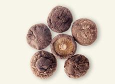 2-3cm厚菇