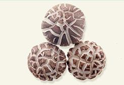 3-4cm白花菇