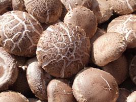 出口级鲜菇